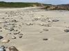 Sannick Bay